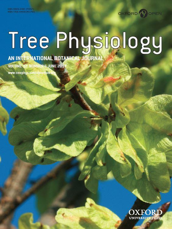 treeph.cover